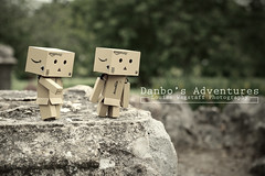 Curious (loulovesdanbo) Tags: stilllife cute toy sweet character sunny figure danbo toyphotography softtone revoltech danboard danboru danbomini danbophotography