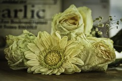 The beauty of dying (ParadoX_Design) Tags: wood old flower nature beauty rose yellow table dead death decay boquet flore