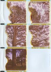 Bends with pine (Maija Karisma) Tags: nature collage polaroid instant expired pola 89 expiredfilm peelapart polaroid180 littlebitbetterscan