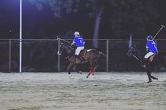 (Captured by Bachi) Tags: horses animal night outdoor shade polo gallop equestrain royalgame poloseason