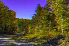 Forest road in Ontario 3-D ::: HDR/Raw Anaglyph Stereoscopy (Stereotron) Tags: autumn ontario canada fall america forest radio canon eos stereoscopic stereophoto stereophotography 3d woods raw control north kitlens twin anaglyph stereo backcountry stereoview outback remote spatial 1855mm hdr province redgreen 3dglasses hdri indiansummer transmitter stereoscopy synch anaglyphic optimized in threedimensional stereo3d cr2 stereophotograph anabuilder synchron redcyan 3rddimension 3dimage tonemapping 3dphoto 550d stereophotomaker 3dstereo 3dpicture anaglyph3d yongnuo stereotron