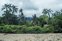 _NGE7910.jpg (Nico_GE) Tags: selvahumedatropical colombia sancipriano pacifico comunidadesafro valledelcauca co