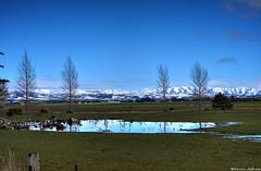 Winter blues (Kevin_Jeffries) Tags: mountain alps fields water snow newzealand kevinjeffries tree winter blue