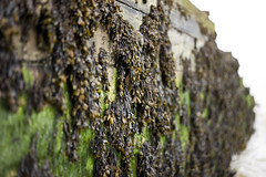 Sea weed (jamiethompson01) Tags: whitstable beach uk unitedkingdom august sony a7 zeiss 55mm 18f oysters