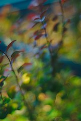 DSC_0315 (criscrot) Tags: nancy lorraine d200 parcsaintemarie bokeh 50mm18 automne autumn buisson