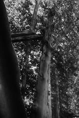 Fotografias con vaselina en el filtro UV (Sersio_Photographer) Tags: corua del conde fotografodecoruadelconde fotos con vaselina