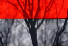red (Peter Schler) Tags: red rot flickr shadows schatten peterpe1