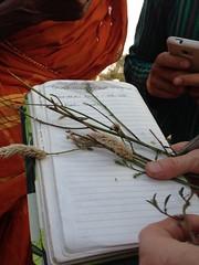 Plant studies
