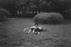 Yoyogi (TKBMEDIA) Tags: dog film darkroom 35mm print photography tokyo streetphotography documentary  tmax400  contaxt2 yoyogikoen   blackandwhitefilm darkroomprint tkbmedia tokyodiary