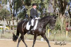 IMG_8086 (gavinglis) Tags: horses horse equestrian equine tamworth horseandrider armidale dressage moonbi aussieequestrian tamworthdressage