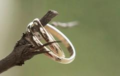 CyT (Silvher) Tags: wedding groom bride marriage rings brideandgroom weddingphotographer
