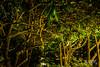 (Craig Ladd Photography) Tags: manteo gapc elizabetheangardens
