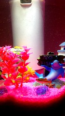 Derek the fish smiling for a photo #neontetra.  (gvt16) Tags: neontetra