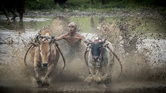 41_20160315-171434-_DSC5563 (trueforever) Tags: indonesia ibis bukittinggi padang novotel pagaruyung minangkabau jamgadang lembahharau westsumatera batusangkar tanahdatar ngaraisianok padangpanjang pacujawi padangpariaman