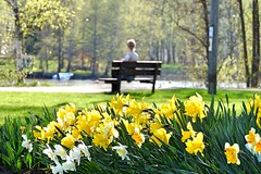 Dreamy spring day (KaarinaT) Tags: flowers trees flower bench spring bed afternoon peaceful calm flowerbed daffodils springflowers sittingonabench