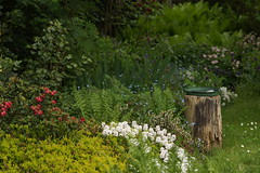 hinten im Garten (ebien) Tags: garden spring allotment garten frühling kleingarten schrebergarten frühblüher frühlingsblume gardenplot