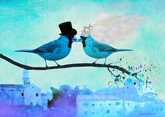 Lovebirds <3 (sandra djurbuzovic) Tags: wedding bird art love birds digital painting bride veil may explore lovebirds bridal oldtown montenegro maj svadba veo vencanje budva crnagora  ptica slika ptice vjencanje inexplore umjetnost umetnost    sandradjurbuzovic