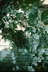 CNV000014 (wwhiteshore) Tags: city urban house jasmine bucharest blooming