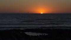 (jrmilie) Tags: ocean sunset bird sunrise de soleil oiseau bidart couch