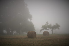 Comme un air d'automne (Excalibur67) Tags: nikon d750 sigma 24105f4dgoshsma paysage landscape brume brouillard fog mist arbres trees nature rundball