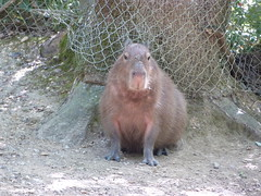 Réserve zoologique de Calviac, 11 août 2016. (Guillaume Cingal) Tags: calviac zoo dordogne calviac11082016 1011août2016