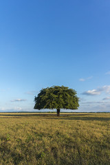 baluran2 (tedy sw) Tags: outdoor sky landscape field savana tree sony nature kit