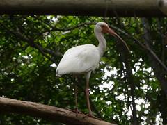 P2230335 (Gareth's Pix) Tags: aviarionacionaldecolombia baru colombia aviario bird