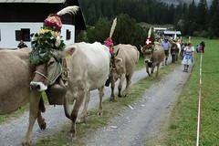 FLIMS, SWITZERLAND (posterboy2007) Tags: flims switzerland cows flowers cowbells herd cowherders sony rx100