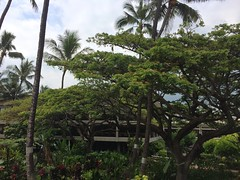 obviously,  is the best airport in the world (anokarina) Tags: hawaii oahu palmtrees hi honolulu hnl honoluluinternationalairport banyantrees  appleiphone5s