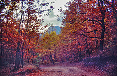 the Autumn path (GEORGE TSIMTSIMIS) Tags: road autumn trees red orange mountain film colors leaves yellow path country wideangle slides fujichrome 35mmphoto velvia50asa analoguephotography pentaxpentaxlx