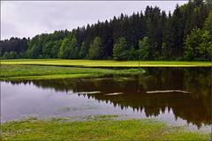 Feuchtgebiet (Helmut Reichelt) Tags: leica germany deutschland bavaria oberbayern mai spiegelung regen frühling m9 ooc überschwemmung feuchtgebiet geretsried böhmwiese leicasummilux35mmf14asphii captureone8