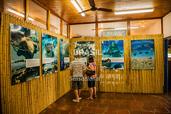 SE_Ubatuba0327 (Visit Brasil) Tags: horizontal arquitetura brasil ubatuba sopaulo turismo cultura lazer sudeste interna projetotamar comgente diurna brasil|sudeste brasil|sudeste|sopaulo brasil|sudeste|sopaulo|ubatuba brasil|sudeste|sopaulo|ubatuba|projetotamar