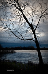 blue sunset (Jan_ice) Tags: sunset tree spring ottawariver nakedtrees moodyblue