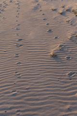 TH20160507A608563 (fotografie-heinrich) Tags: strand spuren ostsee zingst stdteortschaften