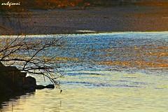 gold water (archgionni) Tags: italy sun nature water reflections river italia branches fiume natura piemonte po sole acqua riflessi rami christiangroup