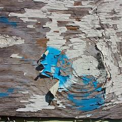 Blue Knot (LarryJay99 ) Tags: wood texture lines canon florida circles patterns westpalmbeach peelingpaint weatheredwood woodgrain canonefs60mmf28macrousm canon60d