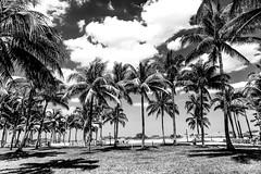 Towering Palms (JPA Photographs) Tags: ocean park sky blackandwhite tree landscape nikon florida miami scenic palm palmtree southbeach d610 jpaphotography