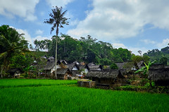 _DSF1191Sep 10 2015 (Bnavas6) Tags: travel trees sky green nature indonesia landscape amazing asia natural hiking explore