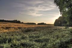Die Felder um Storcha (stephanwenzel) Tags: sunset canon sonnenuntergang felder sachsen fields cereals getreide photomatix neschwitz dorfkind storcha eos700d kleinerspaziergang weidlitz