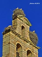 Zamora 10 campanario vivienda (ferlomu) Tags: iglesia zamora cigea romanico ferlomu