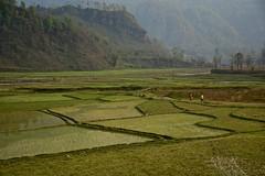 On the road to Himalaya! (Antonio Cinotti ) Tags: nepalroutes nepal asia nikond7100 nikon d7100 nikon1685 pokhara himalaya paddies landscape