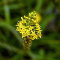 Day 6 19 Logan Botanic Garden little yellow flowers (bob watt) Tags: uk plants flower june canon scotland 7d 2016 18135mm loganbotanicgarden canoneos7d kirkcudbrightholidayjune2016
