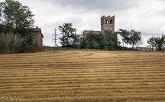 entre lnies (nuri_bri) Tags: cultivos cereals cereales trigo blat conreus