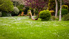 garden-3 (danielbumb75) Tags: spring lac apa watter gradina primavara vede