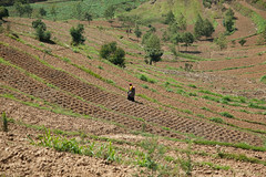 Terraced fields (World Bank Photo Collection) Tags: community rwanda growth agriculture economy development reform publicpolicy foodsecurity agriculturalinvestment economicplanninganddevelopment prioritydevelopment