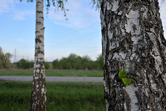 spring 2015 (enzzo_) Tags: sky cloud tree nature clouds landscape nikon bluesky ukraine nikkor vadim springtime nationalgeographic beldy nd4 nikon1 nikkor10mmf28 nikonone nikonpassion landscapesdreams nikonflickraward theacademytreealley nikon1v1 nikonv1 landscapesworld vadimbeldy