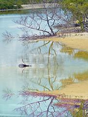 Espejos (Hilda Velez) Tags: charcas reflejosdeagua paisajeseco aguareflejada