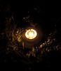 Lompi Gumpi (Jhonatan Quimbayo) Tags: light luz hojas arbol luces arboles arte armenia fotografía ramas abstracción surealismo