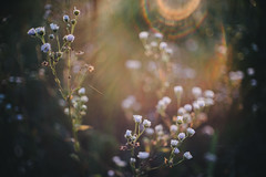 .first sun (.monodrift) Tags: sun closeup colorful bokeh f14 flare fujinon 25mm gm1 cmount
