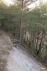 44. Nature walk / Прогулка в лес